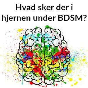 Hvad sker der i hjernen under BDSM?